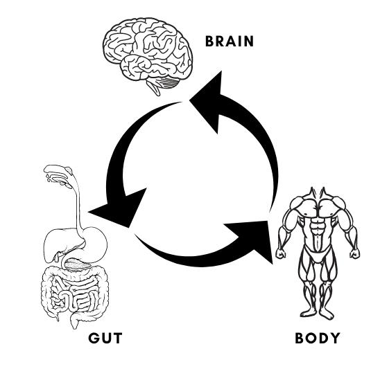 Brain, body, gut connection chart